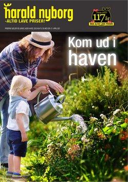 Tilbud fra blomst i Harald Nyborg kuponen ( Udgivet i går)